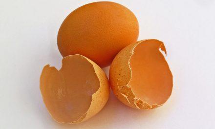 Állati jól néz ki a tojáshéjból készült ékszer