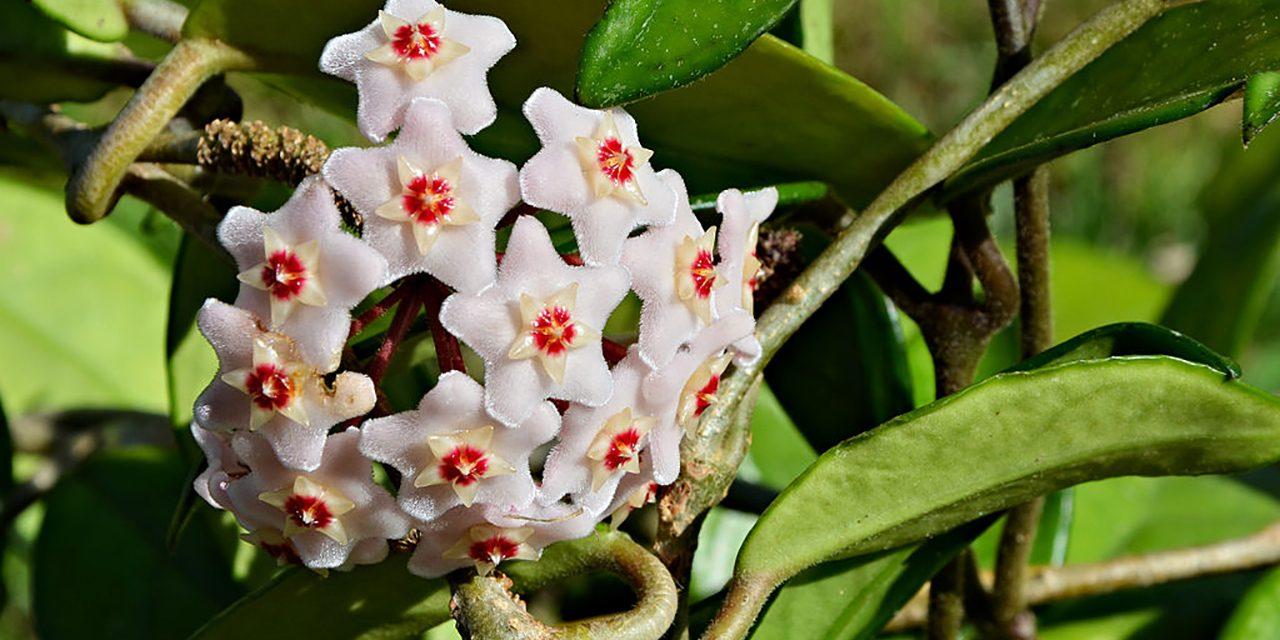 DIY: Lépcsőházi virág örökbefogadása, erős idegzetűeknek