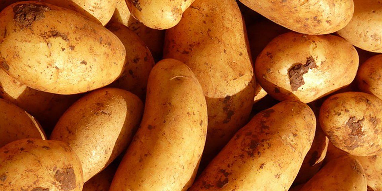 Krumpli vagy nem krumpli, az itt a kérdés