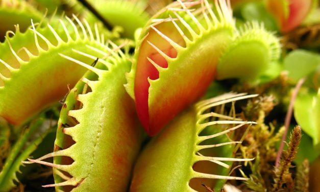 Nem minden növény vega