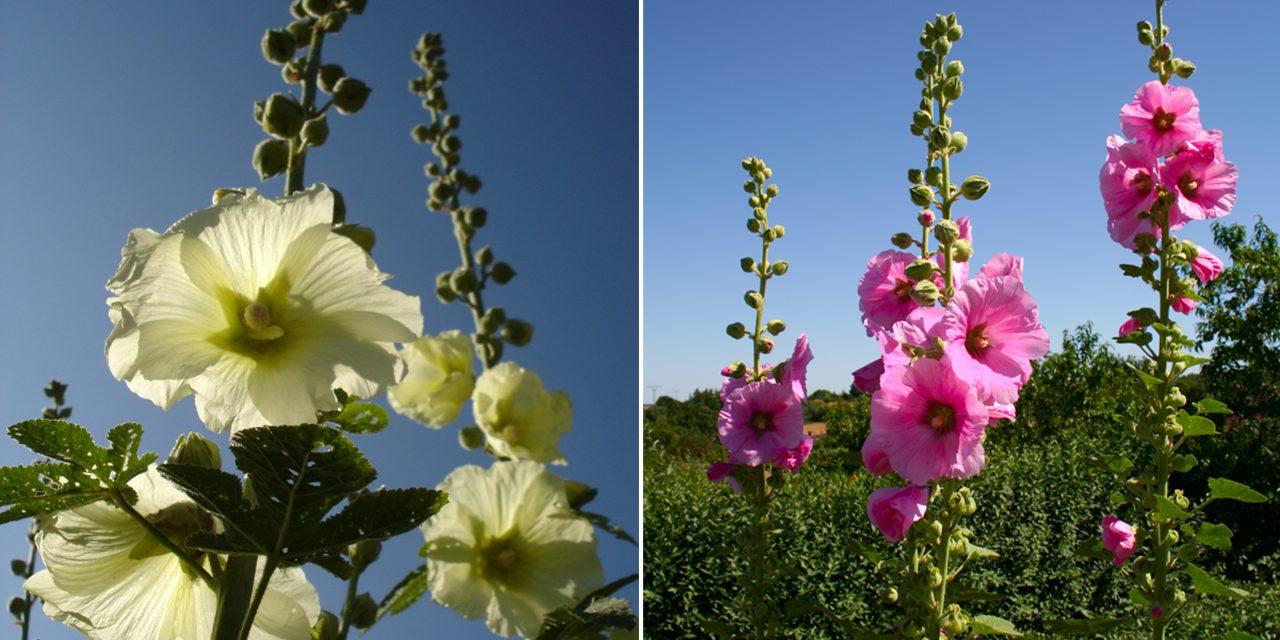 Virágvetés nyár közepén