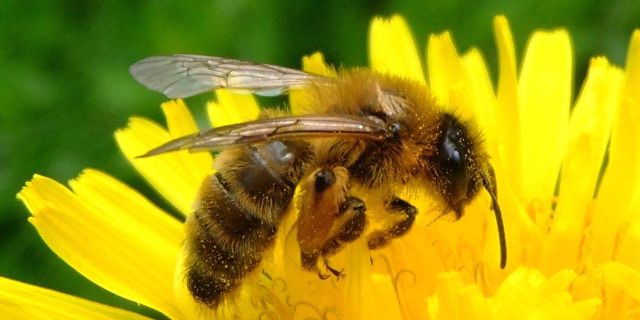 Még több méhet a kertbe!