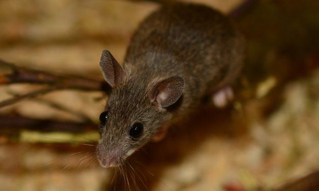 Egeret láttam JÁJ!
