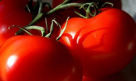 Zöldség vagy gyümölcs a paradicsom?