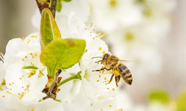 Méhek végveszélyben! Nem vicces. Nagyon nem.