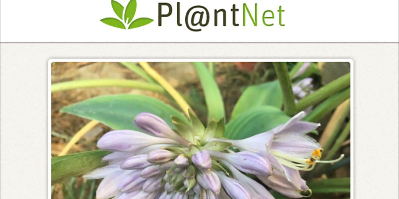Itt a virágok Shazamja, a növény felismerő app