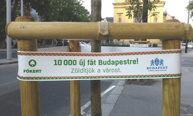 Jó hírek: haladnak a budapesti faültetések is, nem csak a kivágások!