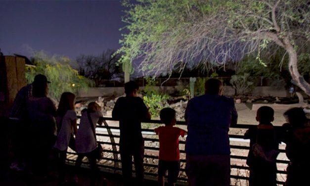 Állatkertek Éjszakája, gyerekkel kötelező
