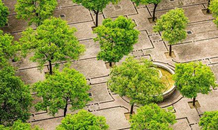 FONTOS: Igyen kapsz fát, ha időben jelentkezel