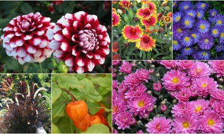 Csodálatos őszi virágötletek szeptemberre