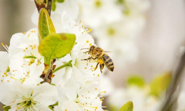Méh vagy darázs? Felismered egyáltalán?