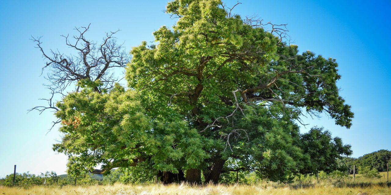 Elstartolt az idei Év Fája verseny!