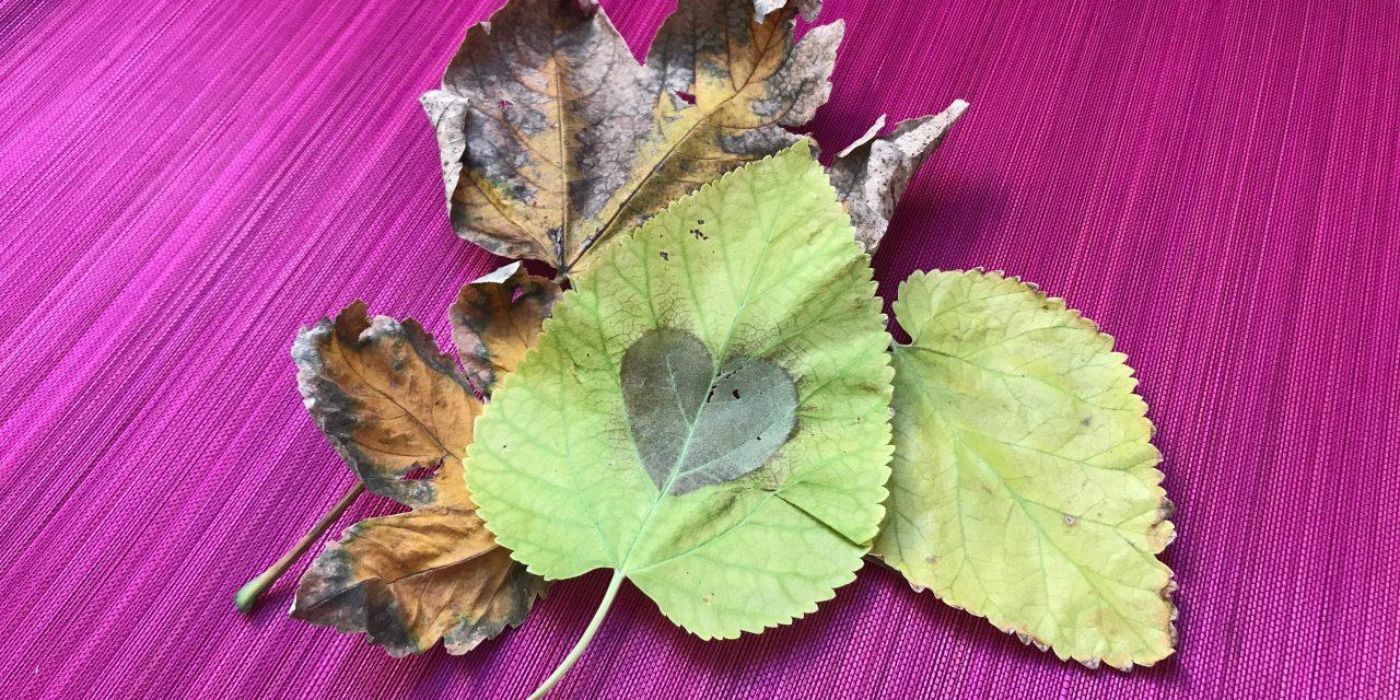 Mókás falevélszitálás, esős őszi napokra