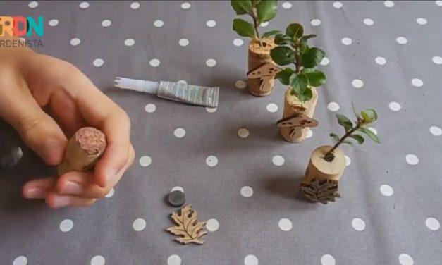 Így készíts élő hűtőmágnest szobanövényekből