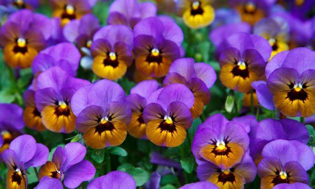 Ma indul az Őszi Kertészeti Napok!