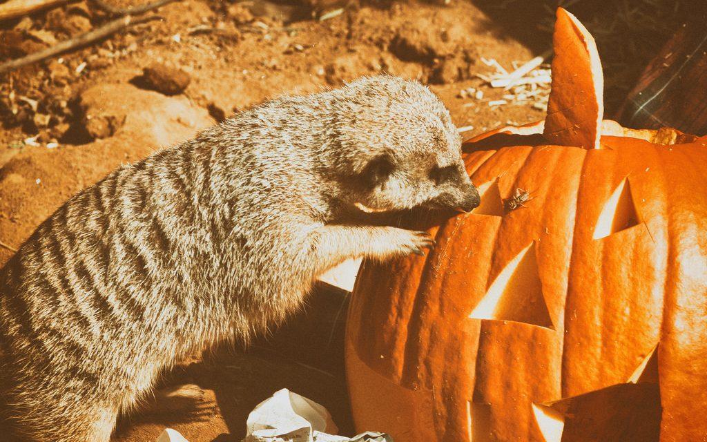 Nem tudod, hova vidd a gyereket az őszi szünetben? Irány az állatkert, most ingyen van!
