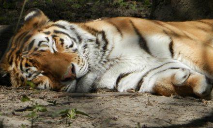 Ingyen van az Állatkert, de csak vasárnapig