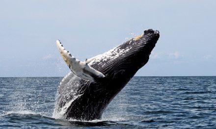 Ausztrália: ahol bálnales, sárkányok és kacagójancsi van az esőerdőben