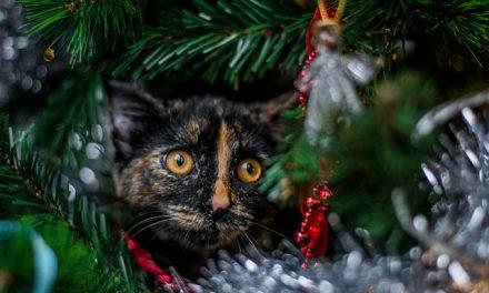Macska és karácsonyfa egy lakásban? Ugyan, mi történhet?