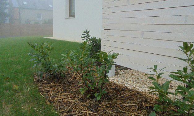 Hobbikertész udvara: ültetés spórolósan
