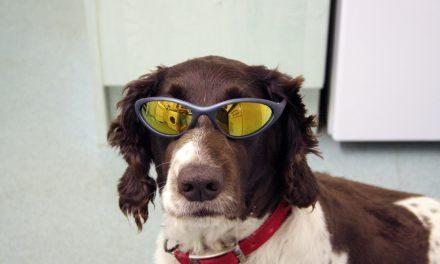 Lehet más a kutyasétáltatás