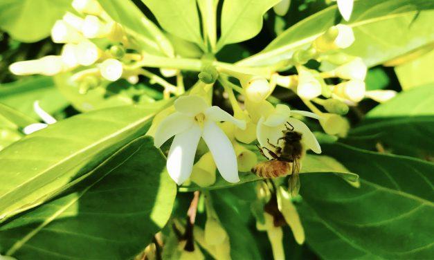 Rövidgatyában méhészkedni, na az menő