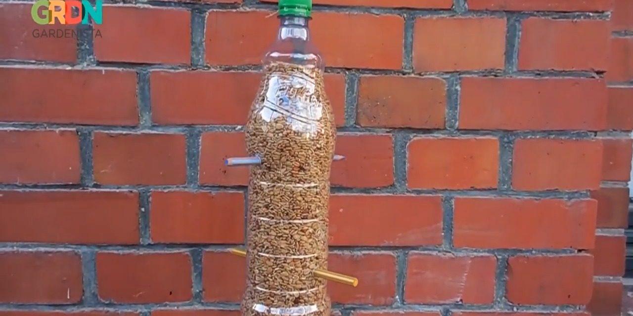 Így készíts madáretetőt PET-palackból!