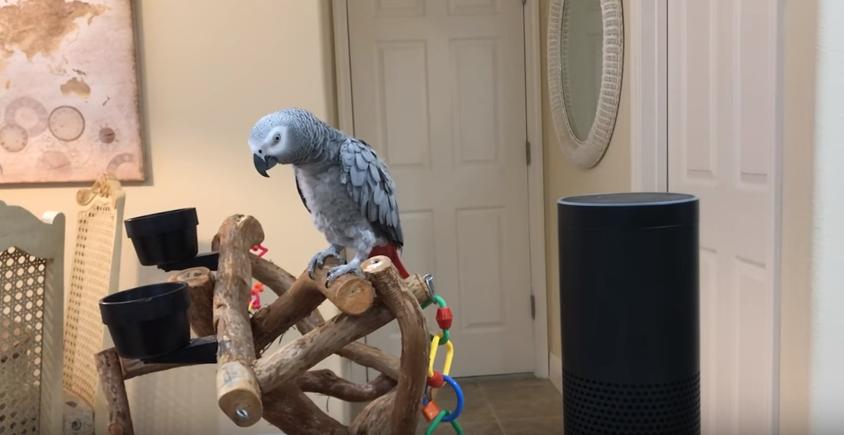 A ház, ahol egy papagájjal irányítható a hangvezérelt világítást
