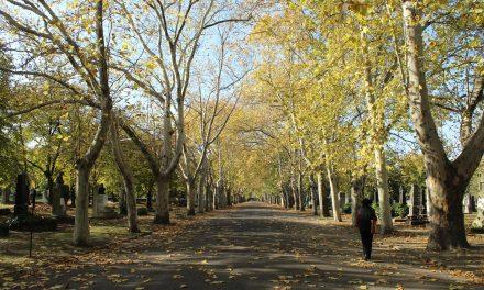 Külföldön piknikeznek a temetőkben, de sétálni nálunk is érdemes bennük