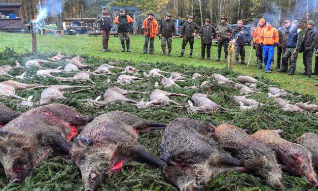 A fajok kihalásához vezethet a szelektív vadászat