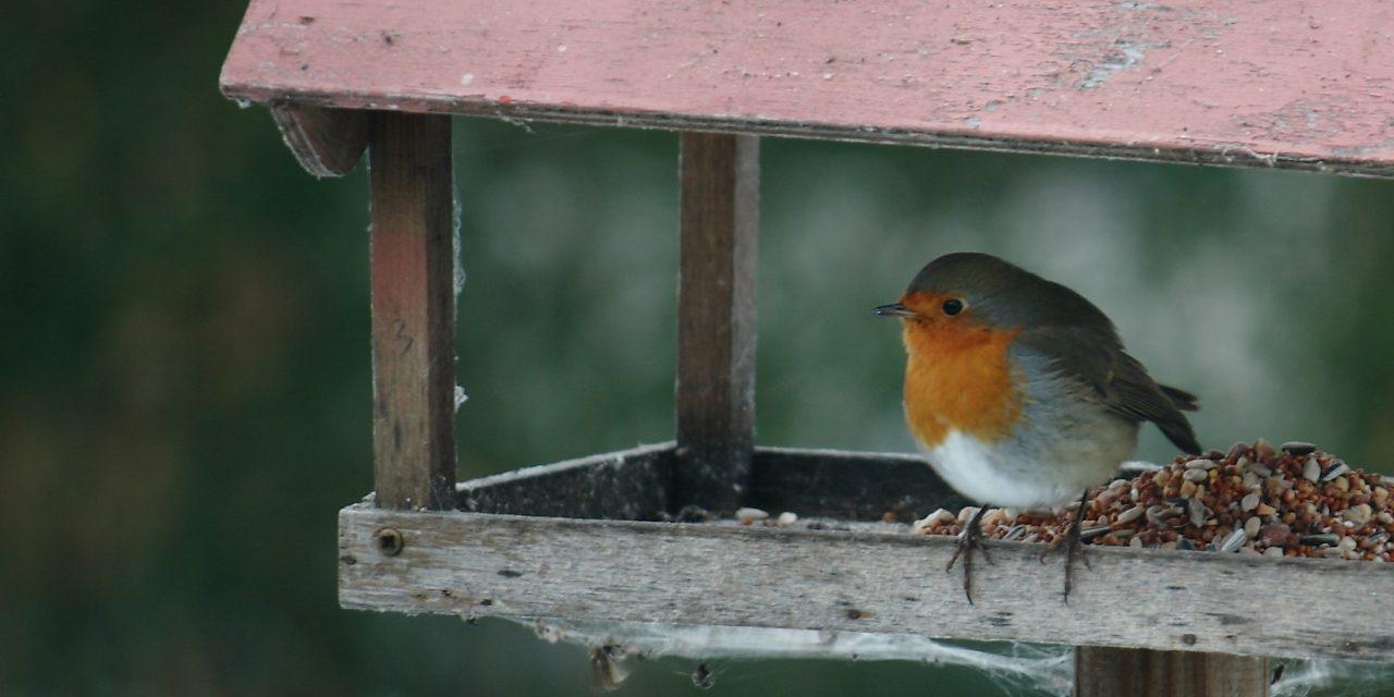 Botrány a madáretetés körül: megrendezett cinkehalál és halálra ítélt vízimadarak?