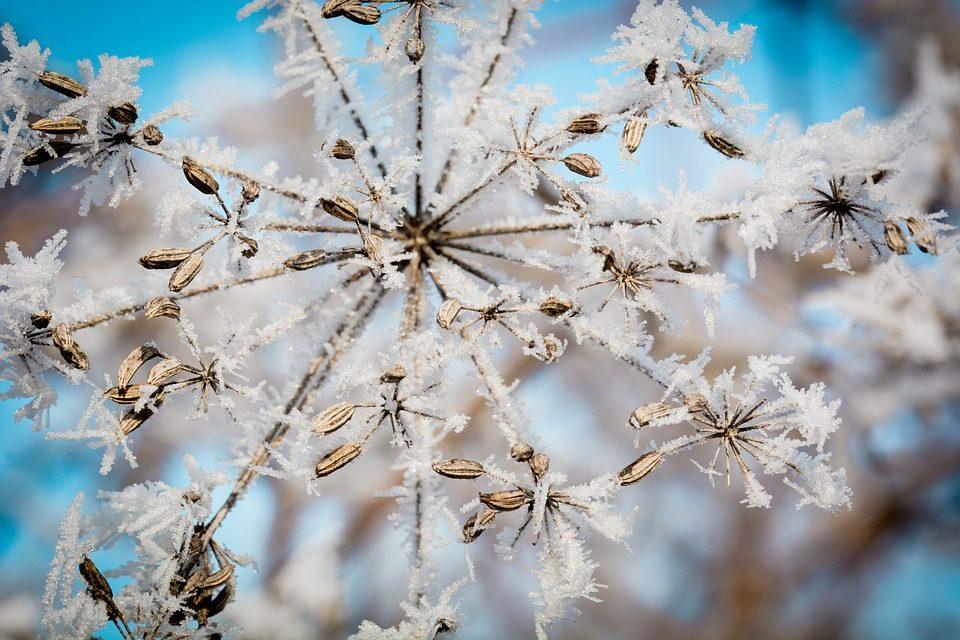 Télen is díszes kert, kevés munkával