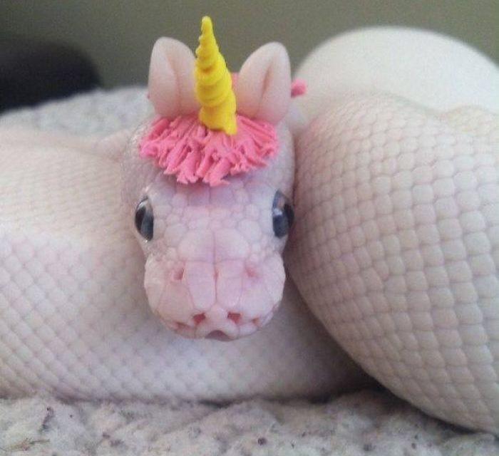 Iszonyodik a kígyóktól? Ez a 20 kép segít leküzdeni a félelmét