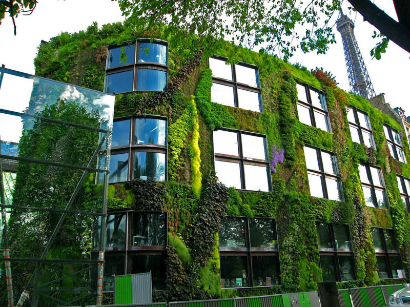 Vertikális kertészkedés, avagy a legzöldebb falak