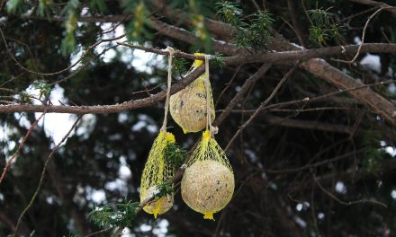 Megöli a madarakat a hálós cinkegolyó?