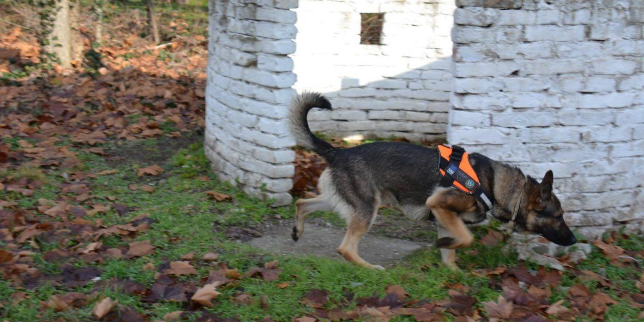 Két új kutya állt szolgálatba a madármérgezések visszaszorítására