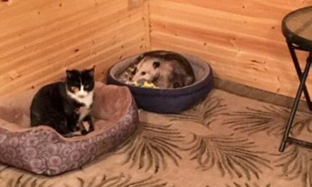 Unokája szólt a nagymamának, hogy az egyik nevelt kiscicája nem is cica