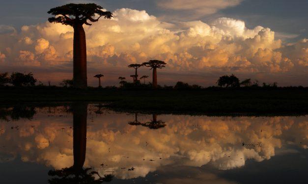 A világ 15 legszebb fája