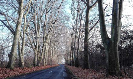 Káprázatos fasorok Magyarországon is vannak