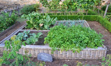 Az internet már a kertünkbe is beteszi a lábát: az Amazon segít a kertészkedésben