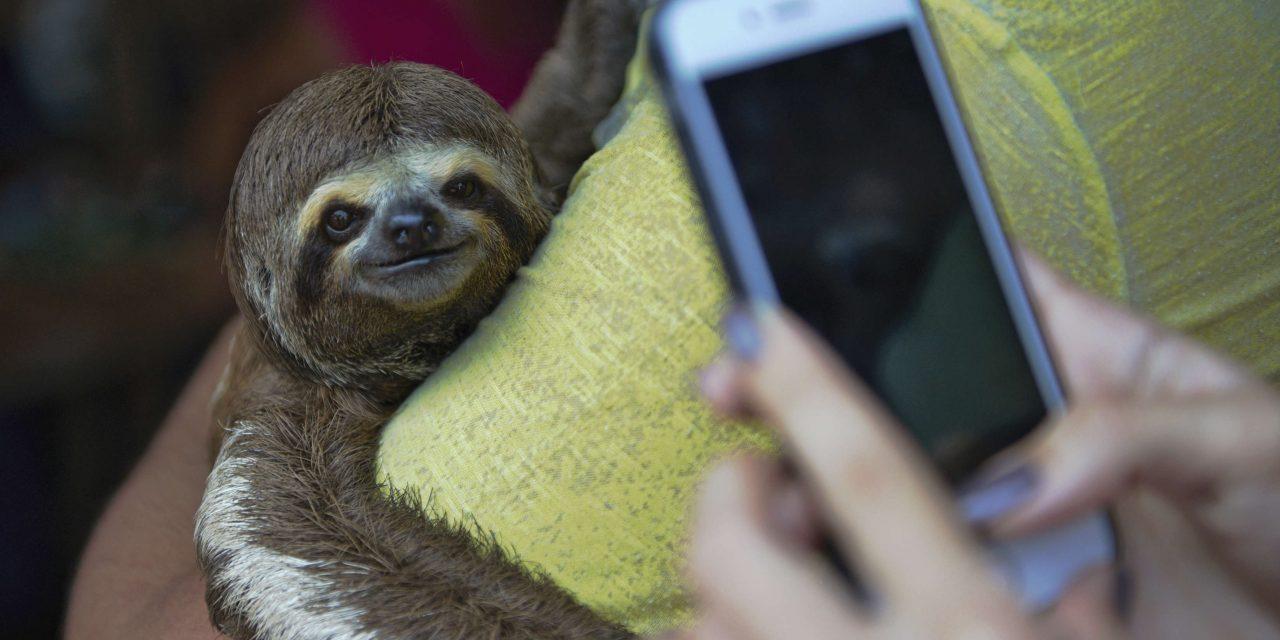 A vadon élő állatokkal készülő szelfik az állatok halálát okozhatják, az Instagram bekeményít