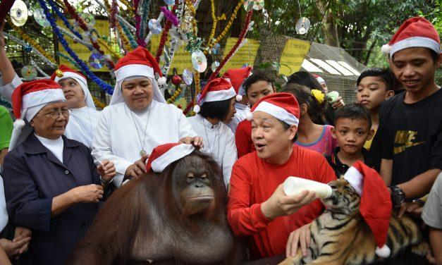 Így telik a karácsony az állatkertben