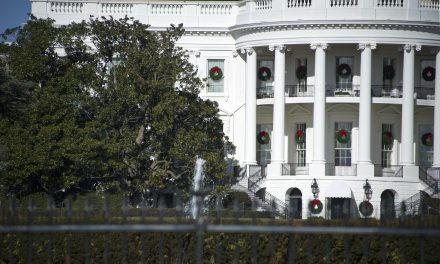 Trumpék eltávolították a Fehér Ház 200 éves fáját