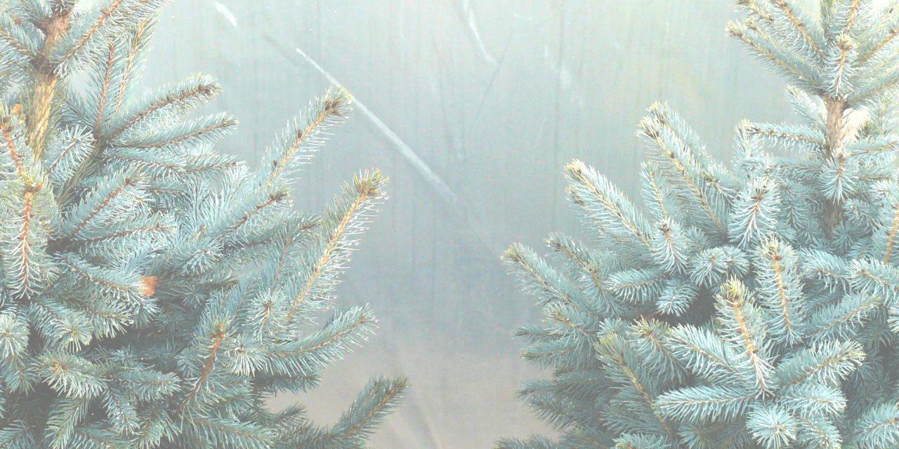 Így ne nyírd ki az élő karácsonyi fenyőfád