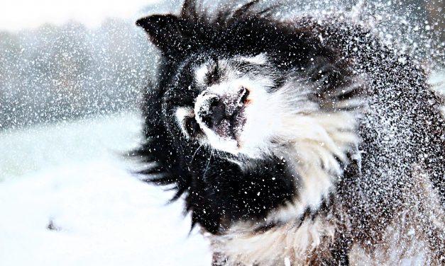 Az első hó mindenkinek varázslat. Majdnem mindenkinek.