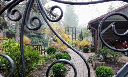 Ilyen egy téli édenkert a Velencei-tó partján – A Titkos Kertben jártam