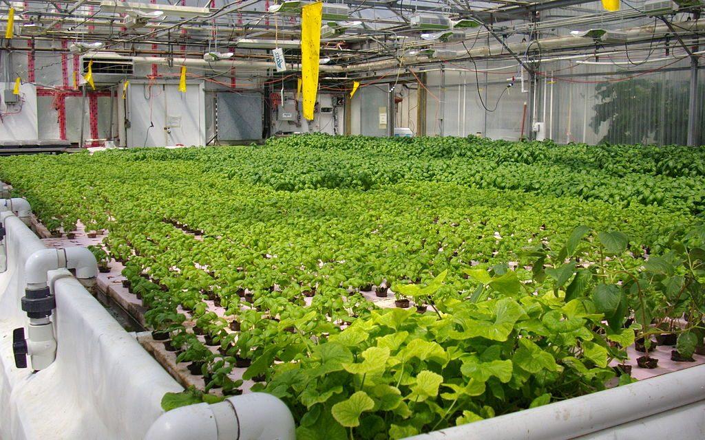 Rengeteg hőt termelt a számítógépe, hűtés helyett növénytermeszetésre fordította