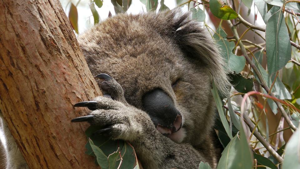 24 kép bizonyítja, hogy Ausztrália egy teljesen más világ