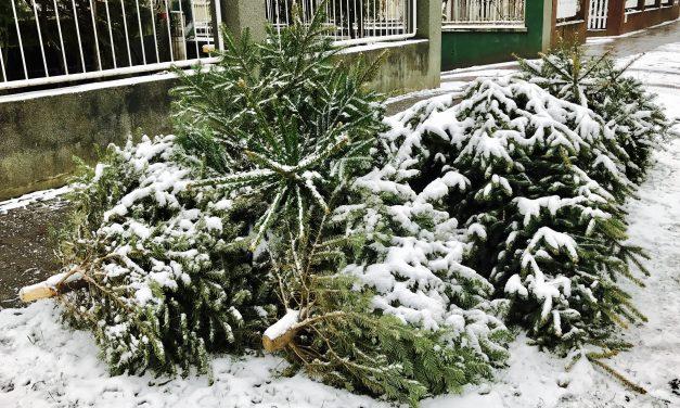 Tudod, hová került a karácsonyfád?