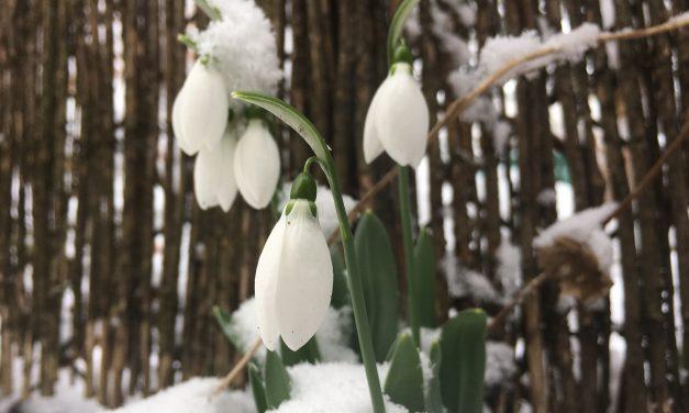 Csak érvényes útlevelű hóvirággal díszítsd a lakást, a többit pedig nézd meg Alcsúton